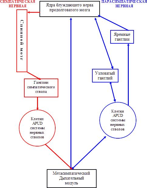 Схема центральной регуляции
